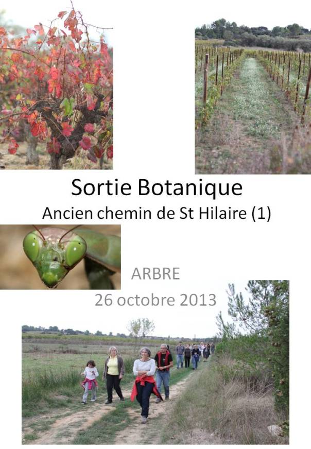 Sortie botanique 26-10-2013 / FICHE BOTANIQUE ©ARBRE - Yves Caraglio