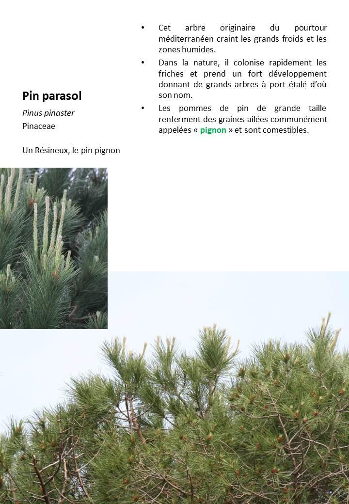 Pin_Parasol