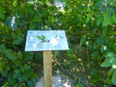Un panneau sur le parcours du sentier botanique